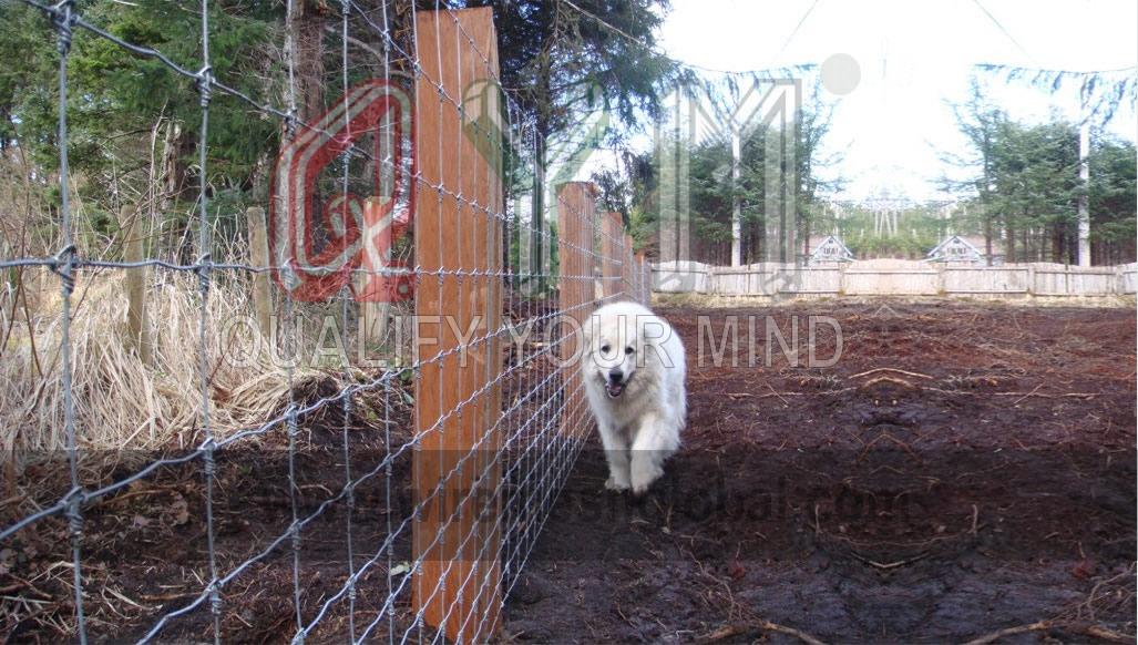 QYM-Farm Fence