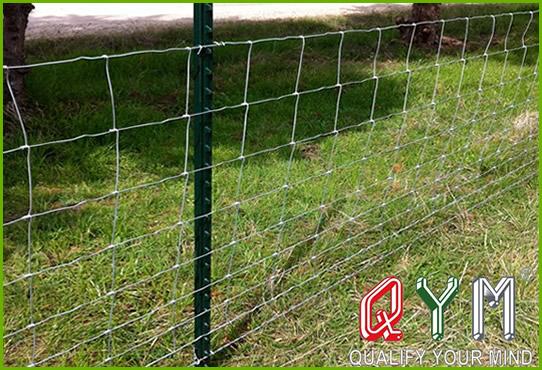 Sheep farm fence